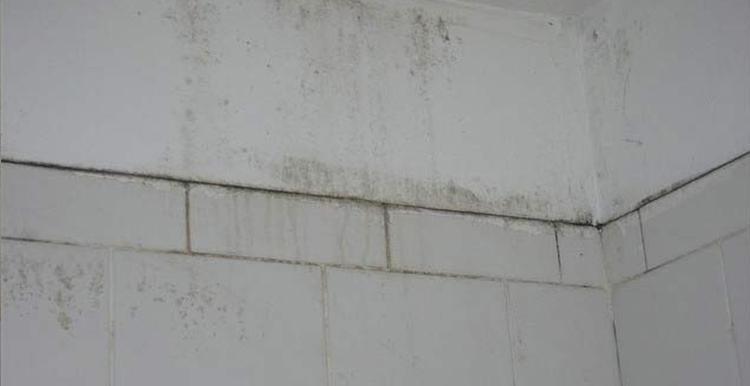 Moisissure sur un mur - Isol'centre